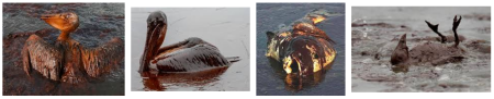Front row seat to the Deepwater Horizon Oil Spill